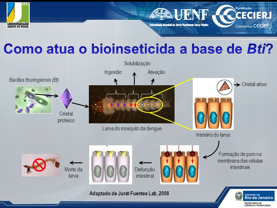 Como atua o bioinseticida a base de Bti