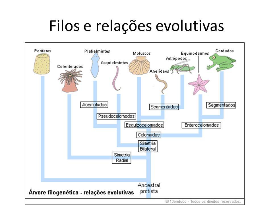 Filos e relações evolutivas