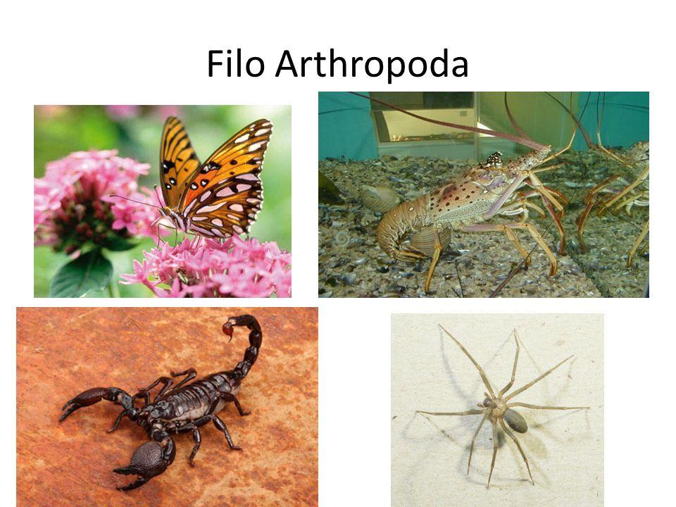 Filo Arthropoda