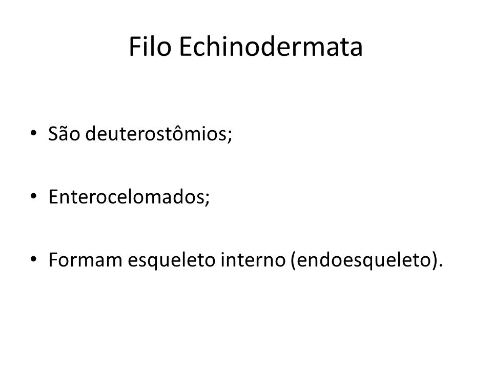 Filo Echinodermata São deuterostômios; Enterocelomados;