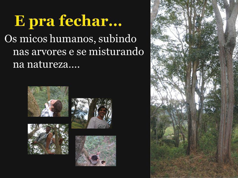 E pra fechar… Os micos humanos, subindo nas arvores e se misturando na natureza….