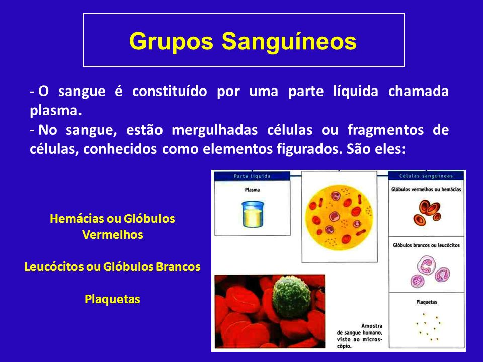 Hemácias ou Glóbulos Vermelhos Leucócitos ou Glóbulos Brancos