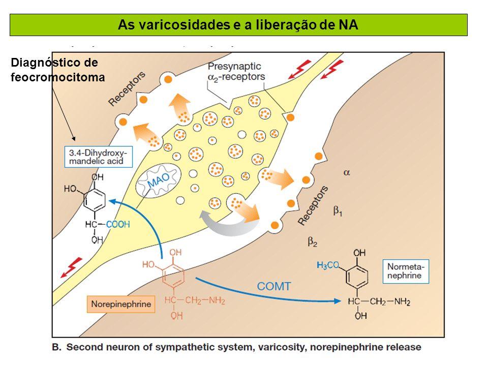 As varicosidades e a liberação de NA