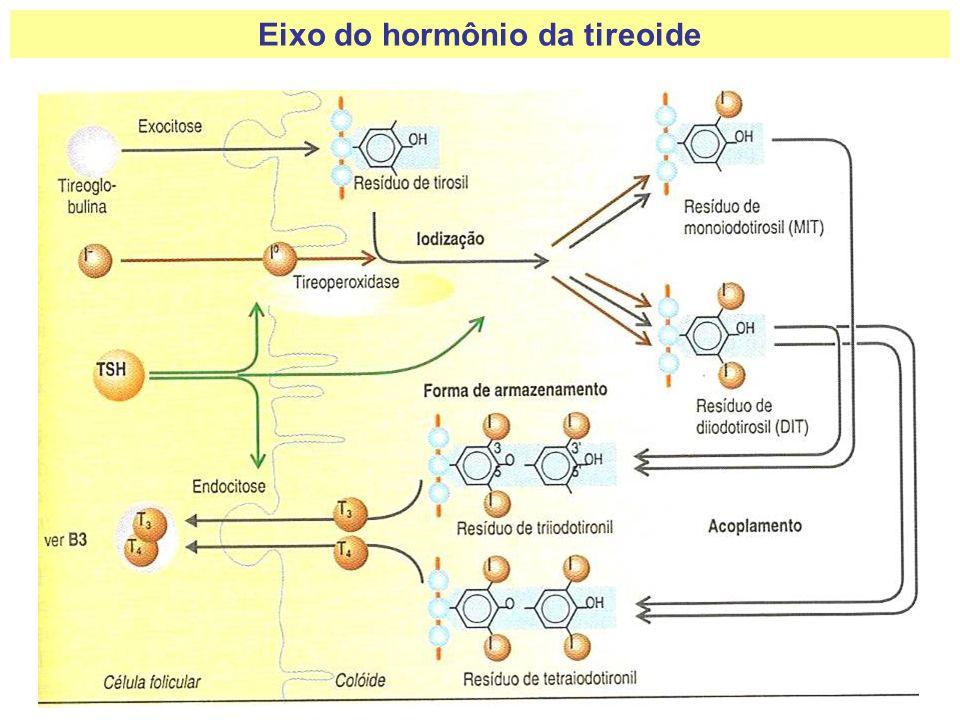 Eixo do hormônio da tireoide