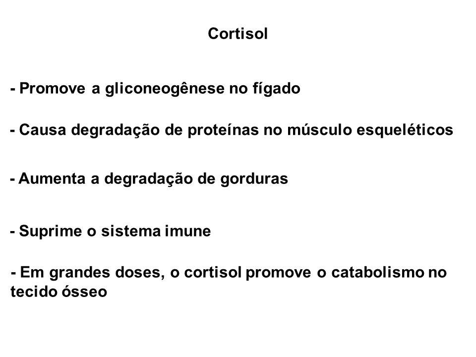 Cortisol - Promove a gliconeogênese no fígado. - Causa degradação de proteínas no músculo esqueléticos.