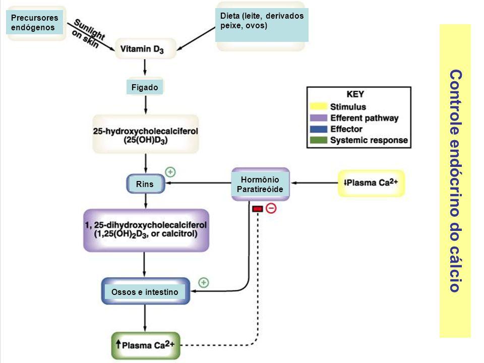 Controle endócrino do cálcio