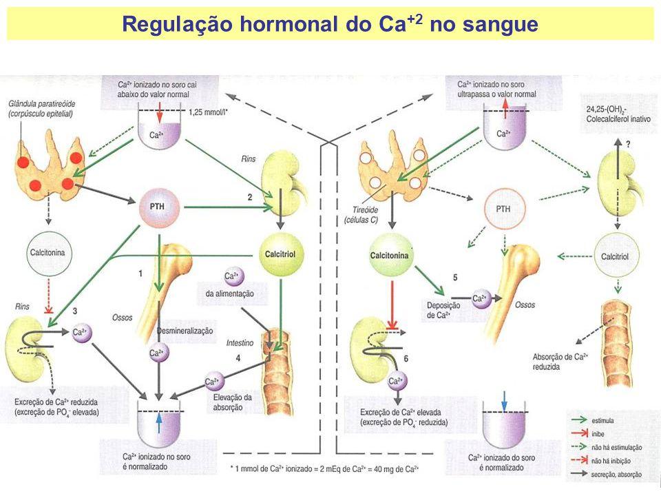 Regulação hormonal do Ca+2 no sangue