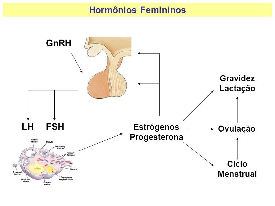 Hormônios Femininos GnRH LH FSH Gravidez Lactação Estrógenos Ovulação