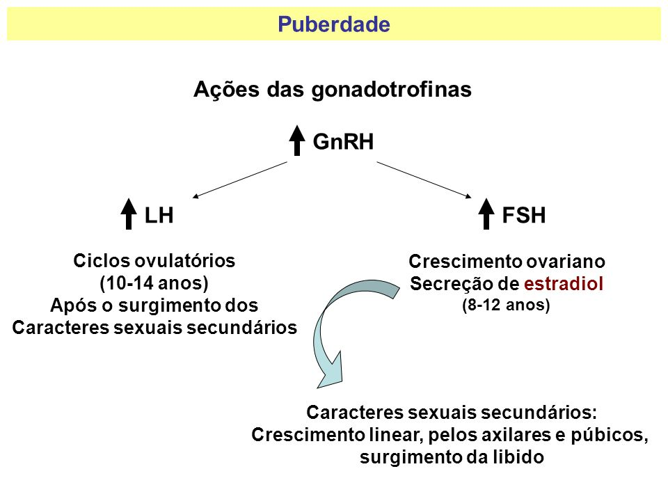 Puberdade Ações das gonadotrofinas