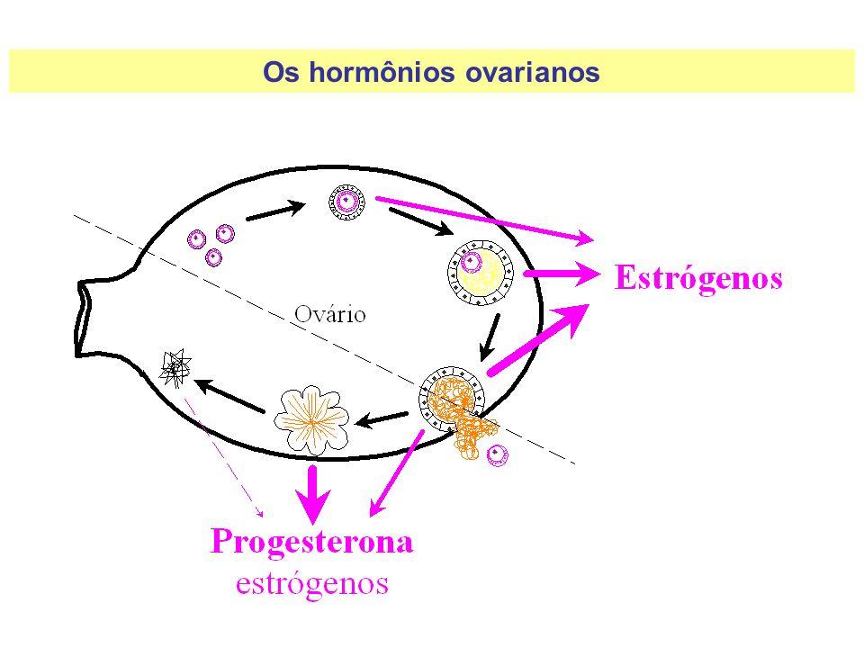 Os hormônios ovarianos