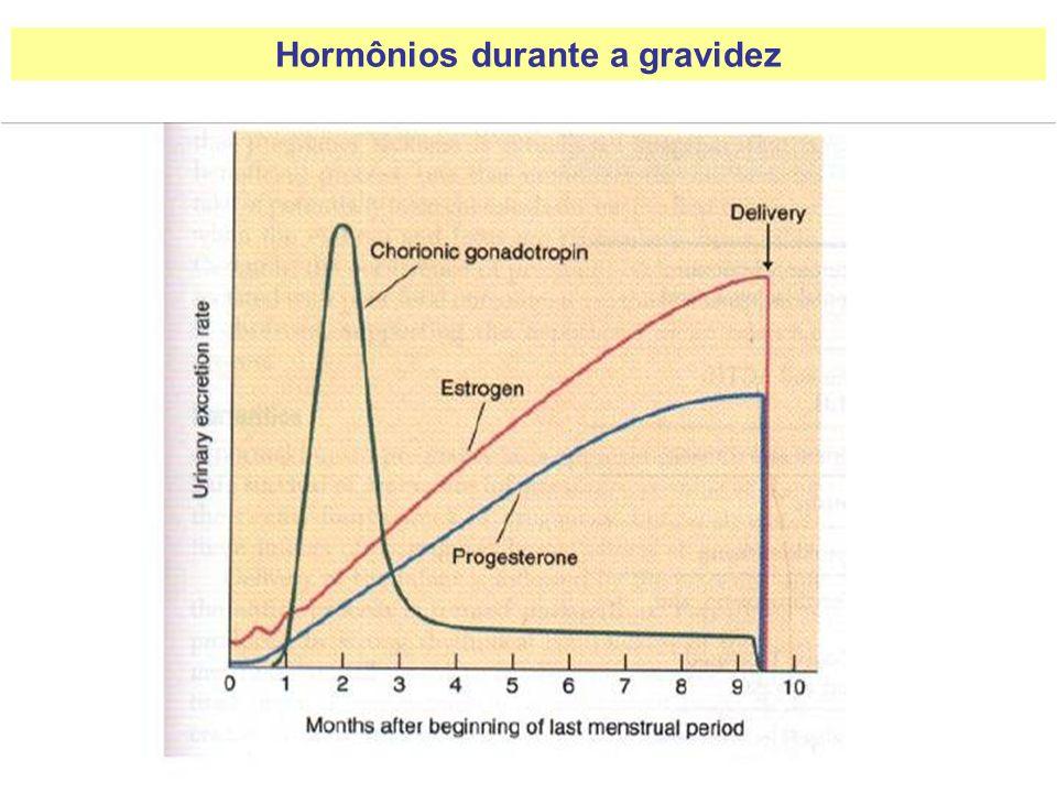 Hormônios durante a gravidez