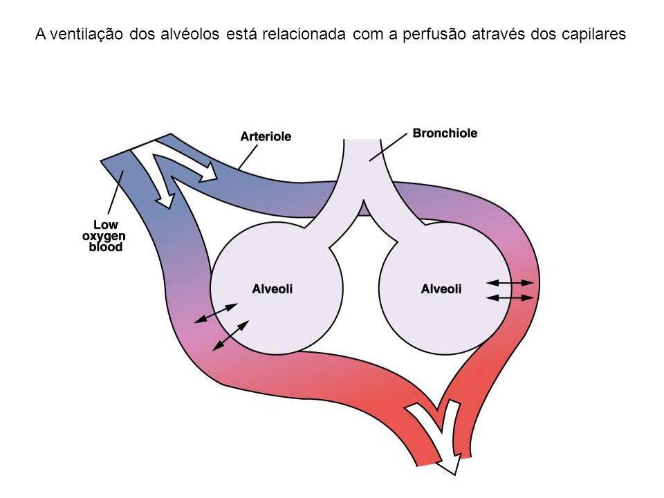 A ventilação dos alvéolos está relacionada com a perfusão através dos capilares
