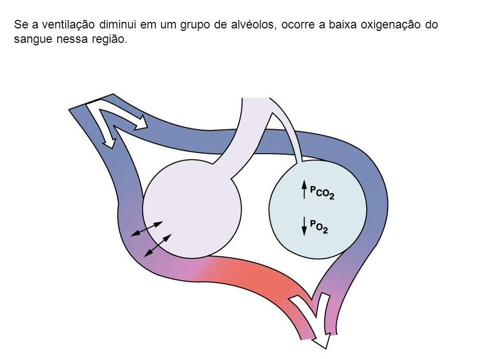 Se a ventilação diminui em um grupo de alvéolos, ocorre a baixa oxigenação do sangue nessa região.