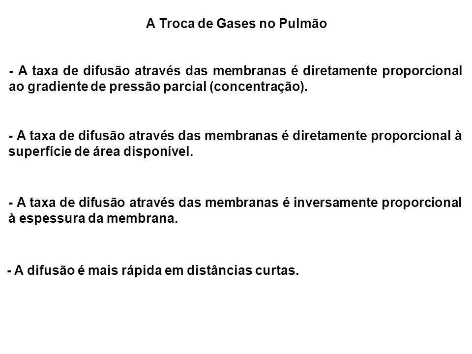 A Troca de Gases no Pulmão