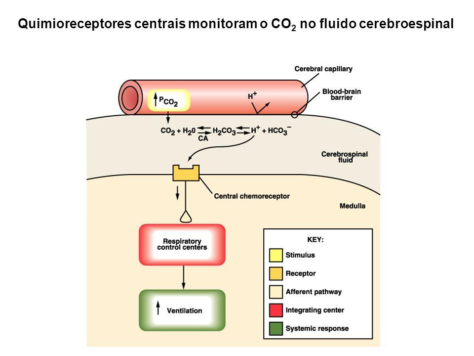 Quimioreceptores centrais monitoram o CO2 no fluido cerebroespinal