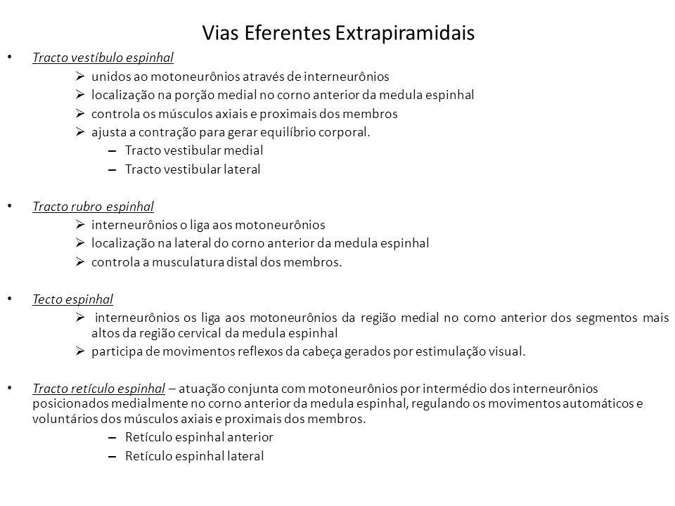 Vias Eferentes Extrapiramidais