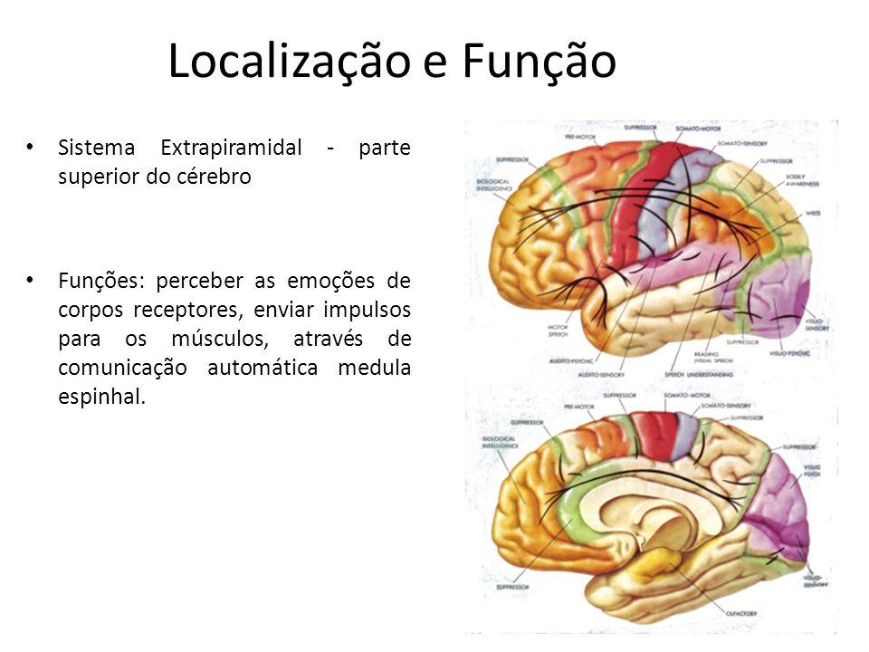 Localização e Função Sistema Extrapiramidal - parte superior do cérebro.
