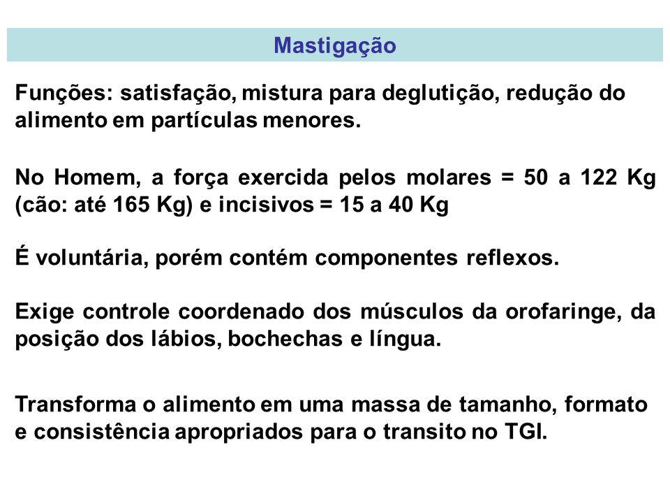 Mastigação Funções: satisfação, mistura para deglutição, redução do alimento em partículas menores.