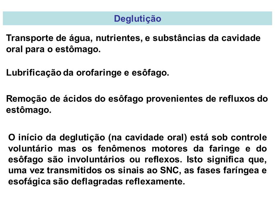 Deglutição Transporte de água, nutrientes, e substâncias da cavidade oral para o estômago. Lubrificação da orofaringe e esôfago.