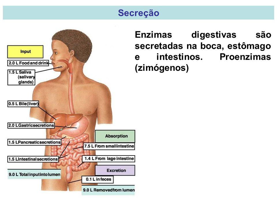 Secreção Enzimas digestivas são secretadas na boca, estômago e intestinos. Proenzimas (zimógenos)