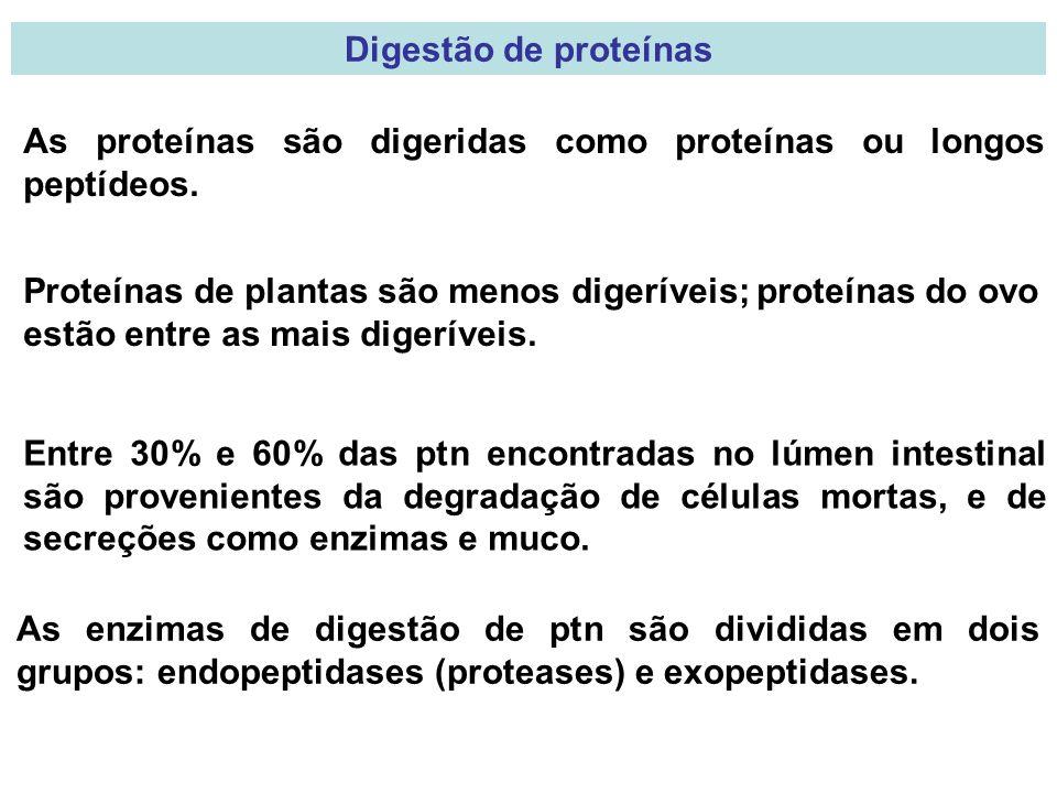 Digestão de proteínas As proteínas são digeridas como proteínas ou longos peptídeos.