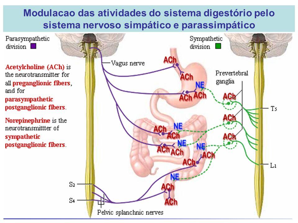 Modulacao das atividades do sistema digestório pelo sistema nervoso simpático e parassimpático