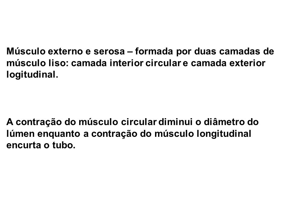 Músculo externo e serosa – formada por duas camadas de músculo liso: camada interior circular e camada exterior logitudinal.