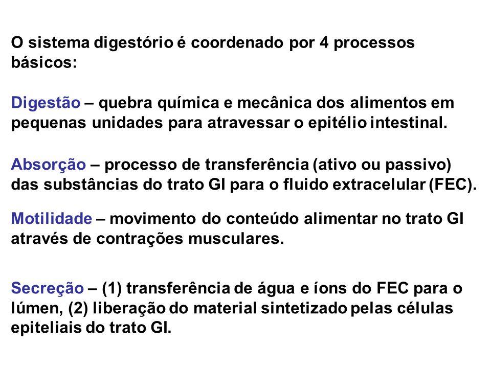 O sistema digestório é coordenado por 4 processos básicos: