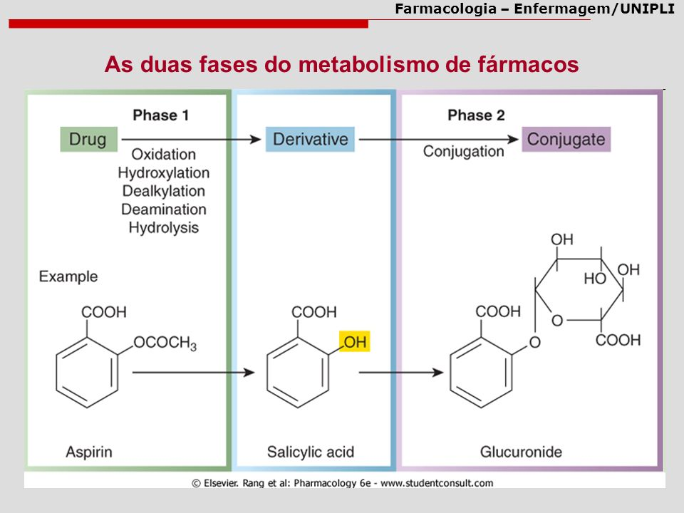 As duas fases do metabolismo de fármacos