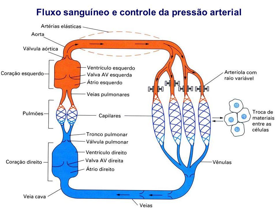 Fluxo sanguíneo e controle da pressão arterial