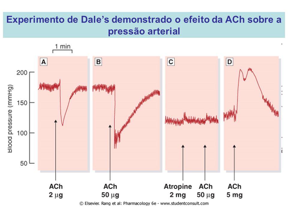 Experimento de Dale's demonstrado o efeito da ACh sobre a pressão arterial