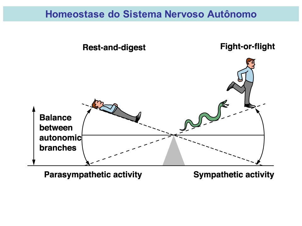 Homeostase do Sistema Nervoso Autônomo