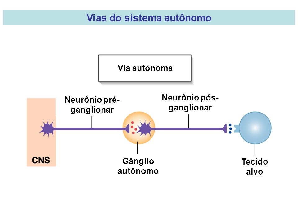 Vias do sistema autônomo