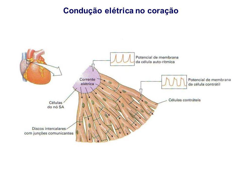 Condução elétrica no coração