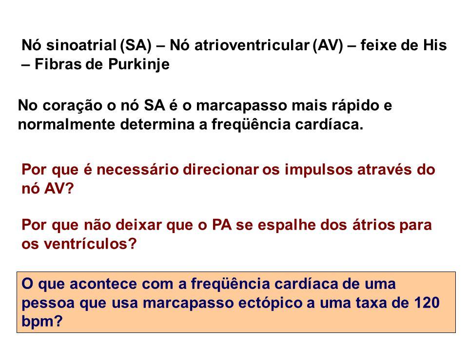 Nó sinoatrial (SA) – Nó atrioventricular (AV) – feixe de His – Fibras de Purkinje
