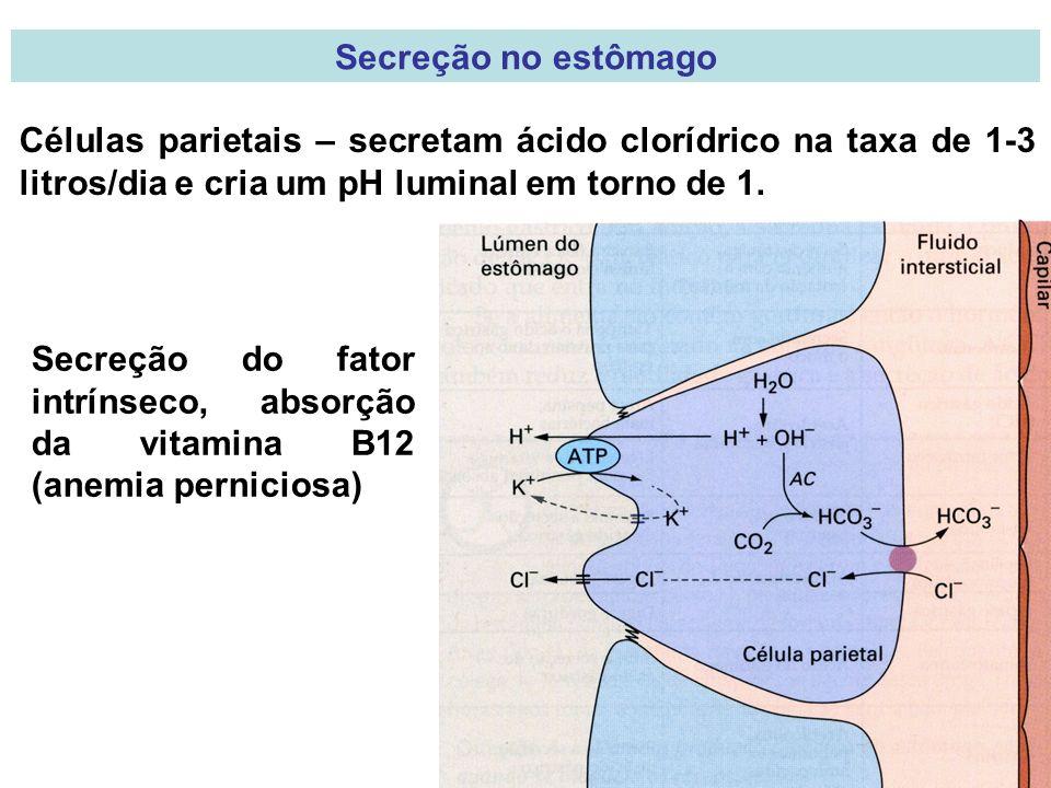 Secreção no estômago Células parietais – secretam ácido clorídrico na taxa de 1-3 litros/dia e cria um pH luminal em torno de 1.
