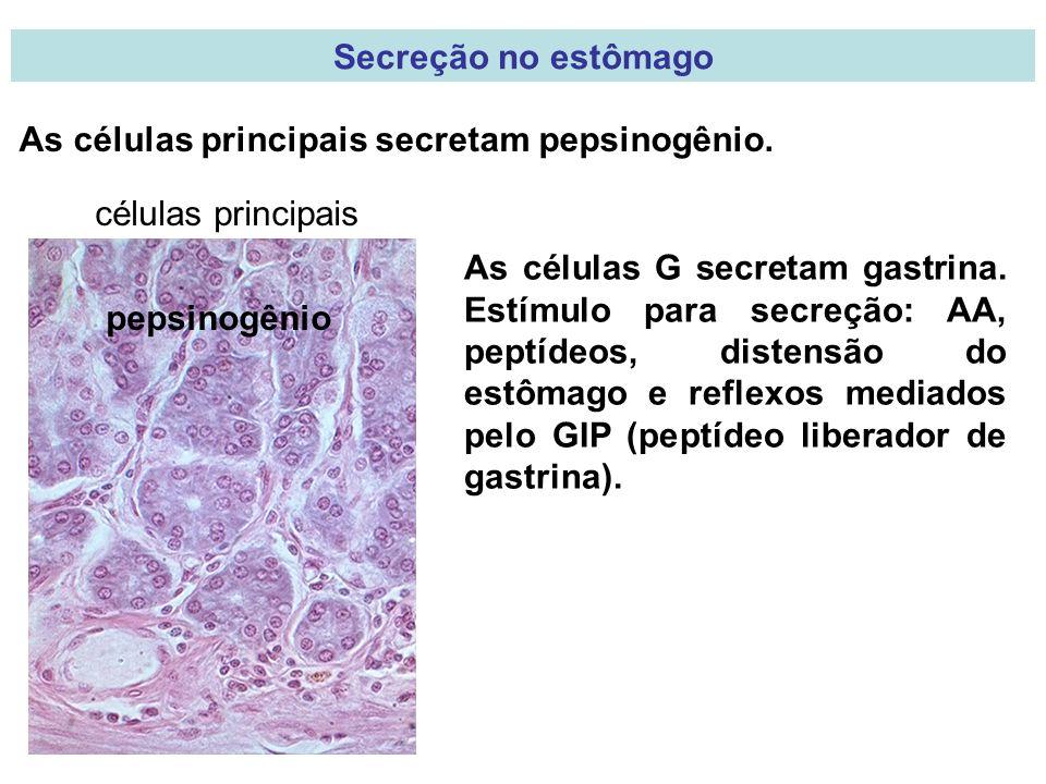 Secreção no estômago As células principais secretam pepsinogênio. células principais.