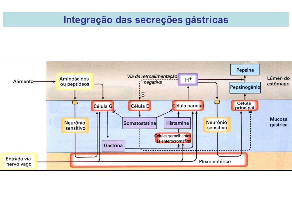 Integração das secreções gástricas
