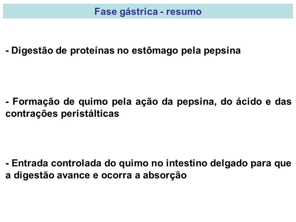 Fase gástrica - resumo - Digestão de proteínas no estômago pela pepsina.