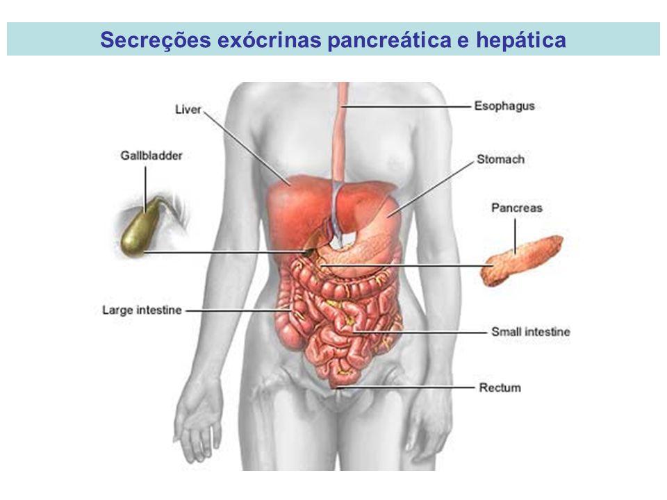 Secreções exócrinas pancreática e hepática