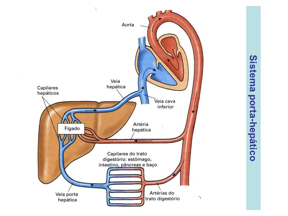 Sistema porta-hepático