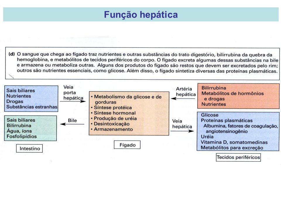 Função hepática