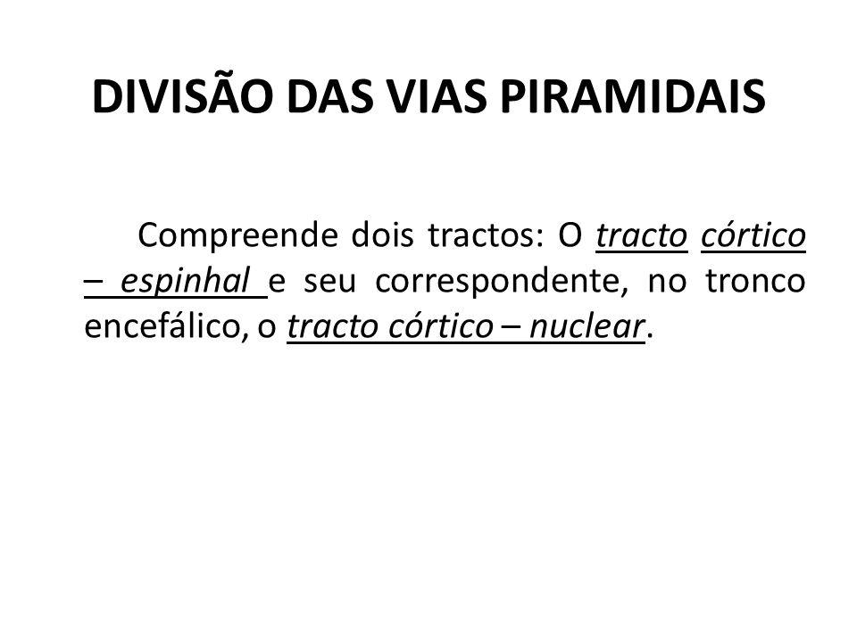 DIVISÃO DAS VIAS PIRAMIDAIS