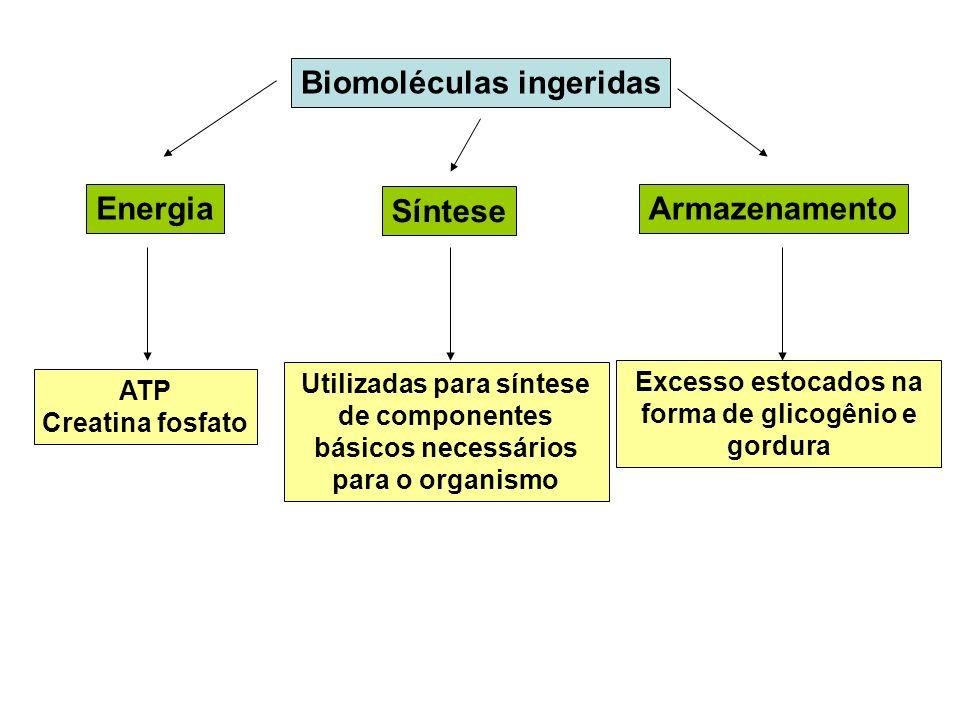 Excesso estocados na forma de glicogênio e gordura
