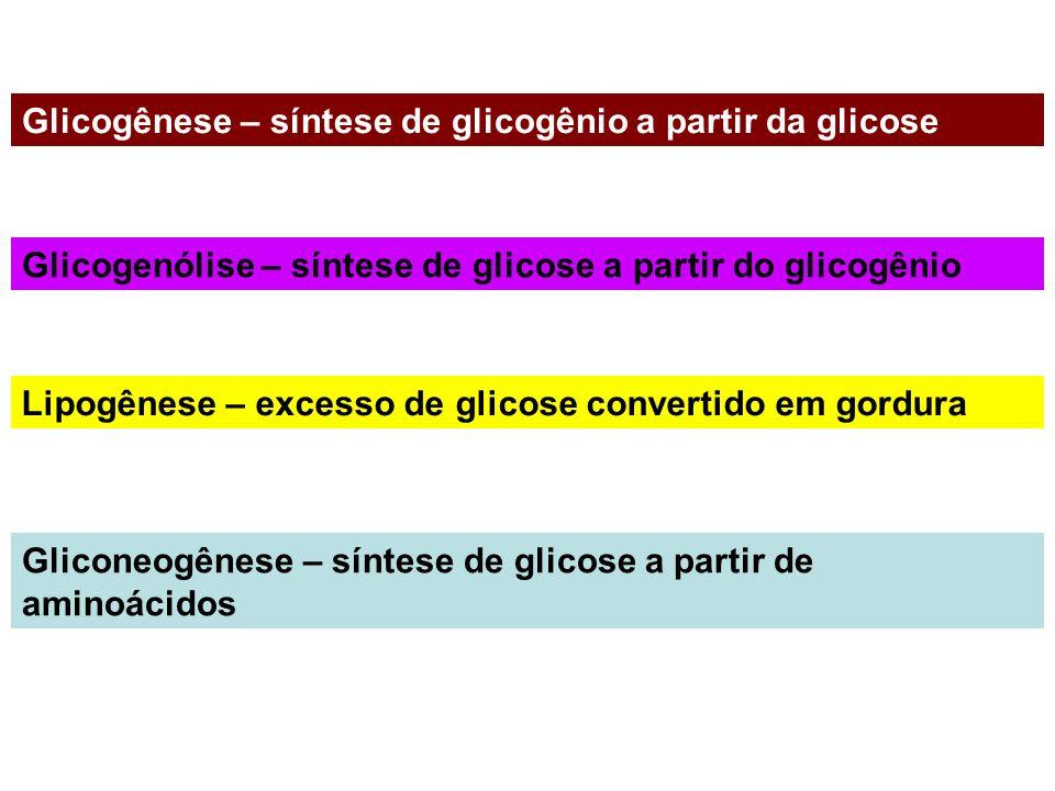 Glicogênese – síntese de glicogênio a partir da glicose