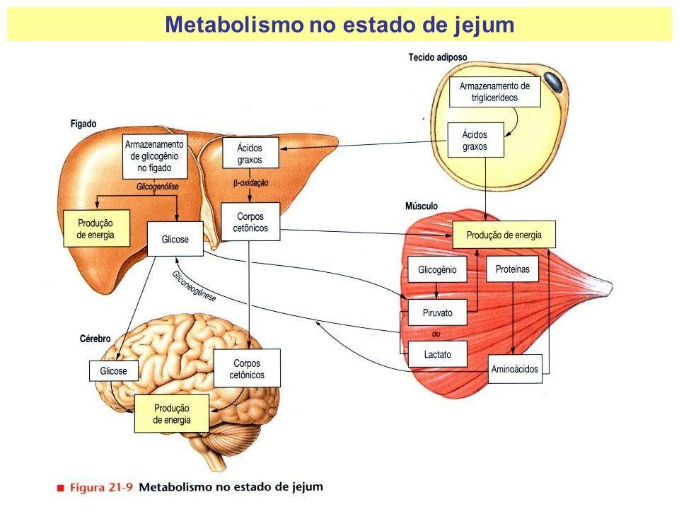 Metabolismo no estado de jejum