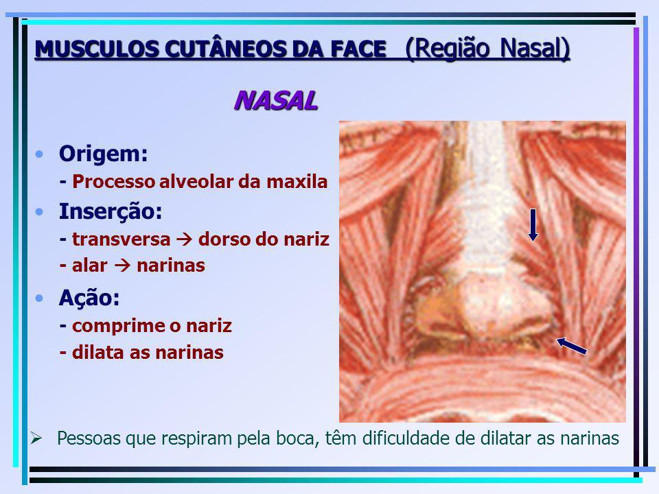 MUSCULOS CUTÂNEOS DA FACE (Região Nasal) NASAL