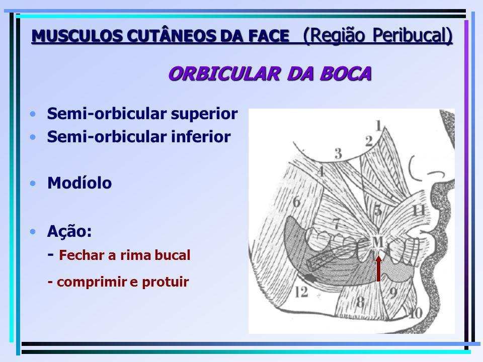 MUSCULOS CUTÂNEOS DA FACE (Região Peribucal) ORBICULAR DA BOCA