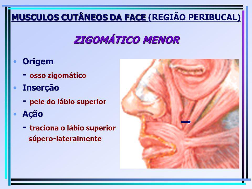 MUSCULOS CUTÂNEOS DA FACE (REGIÃO PERIBUCAL) ZIGOMÁTICO MENOR