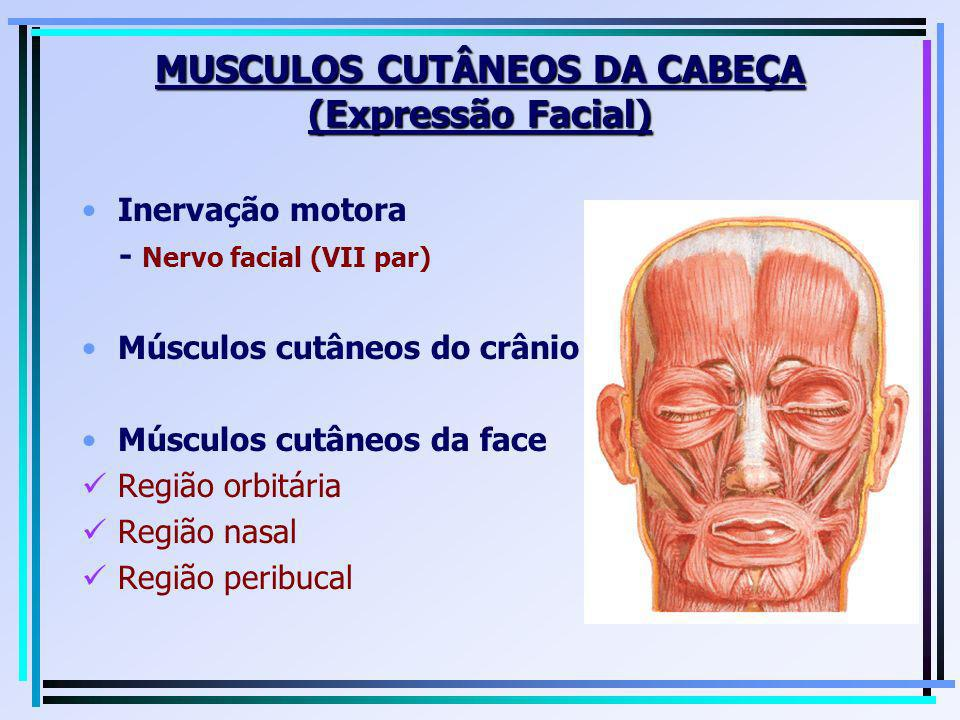 MUSCULOS CUTÂNEOS DA CABEÇA (Expressão Facial)